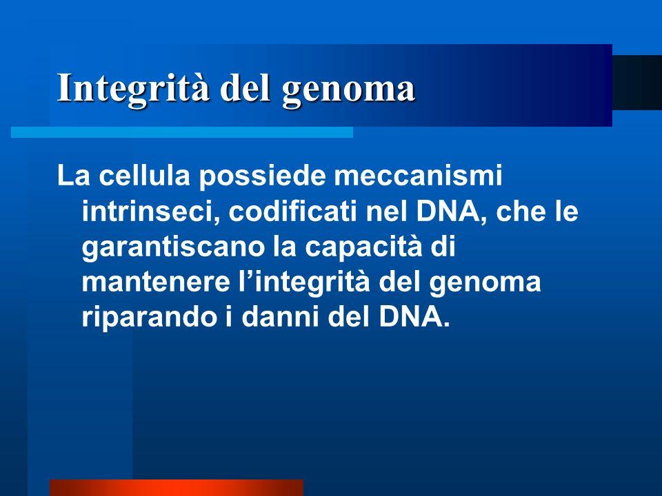 Integrità del genoma