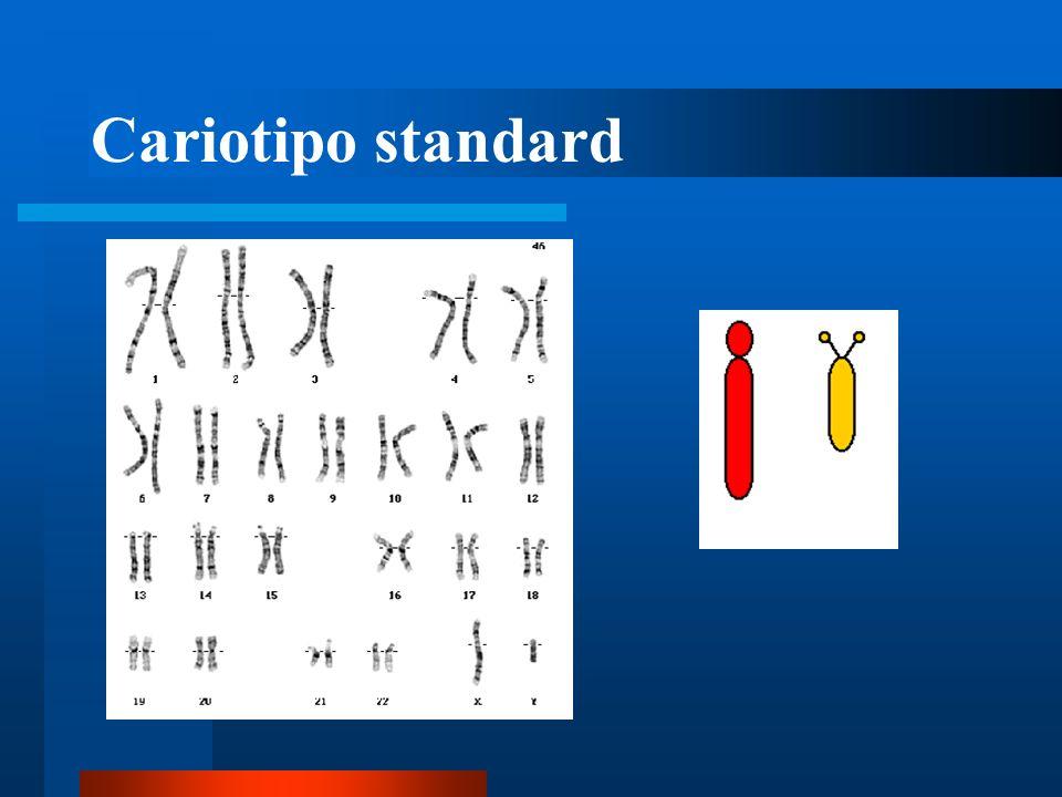 Cariotipo standard