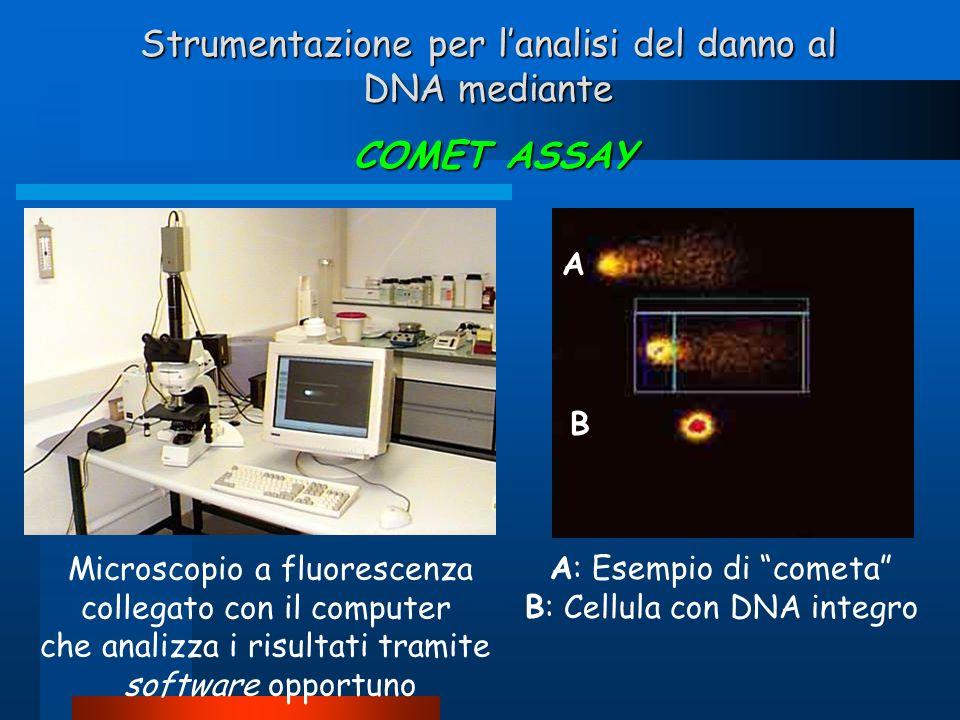 Strumentazione per l'analisi del danno al DNA mediante COMET ASSAY