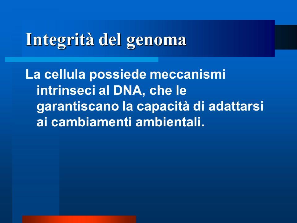 Integrità del genoma La cellula possiede meccanismi intrinseci al DNA, che le garantiscano la capacità di adattarsi ai cambiamenti ambientali.