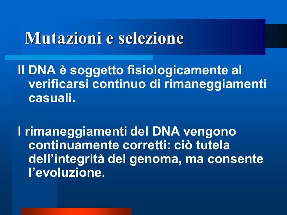 Mutazioni e selezione Il DNA è soggetto fisiologicamente al verificarsi continuo di rimaneggiamenti casuali.