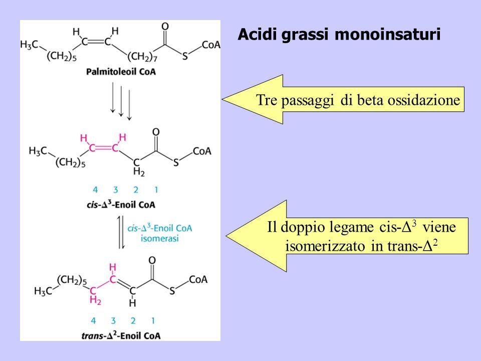 Acidi grassi monoinsaturi