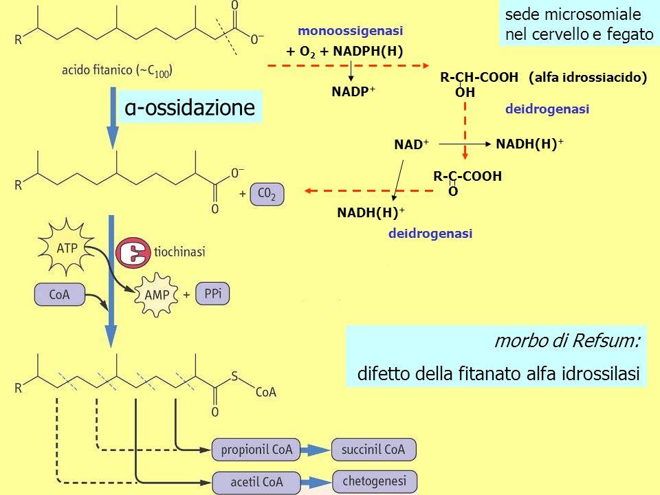 α-ossidazione morbo di Refsum: difetto della fitanato alfa idrossilasi