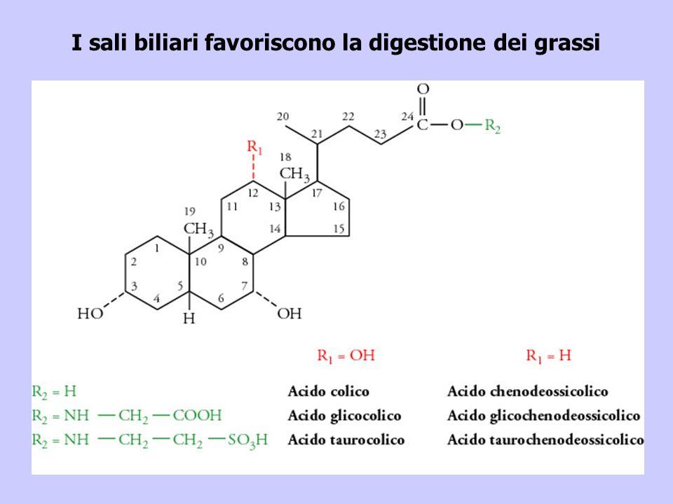 I sali biliari favoriscono la digestione dei grassi
