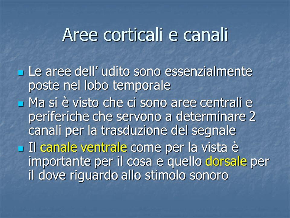 Aree corticali e canali
