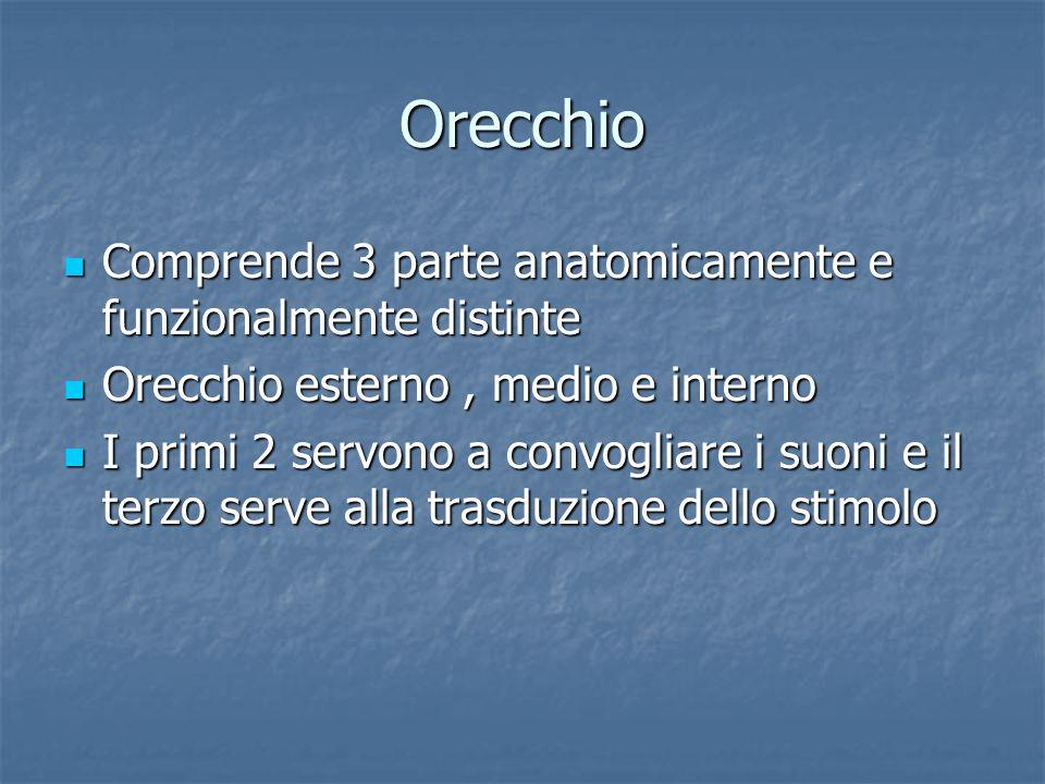 Orecchio Comprende 3 parte anatomicamente e funzionalmente distinte
