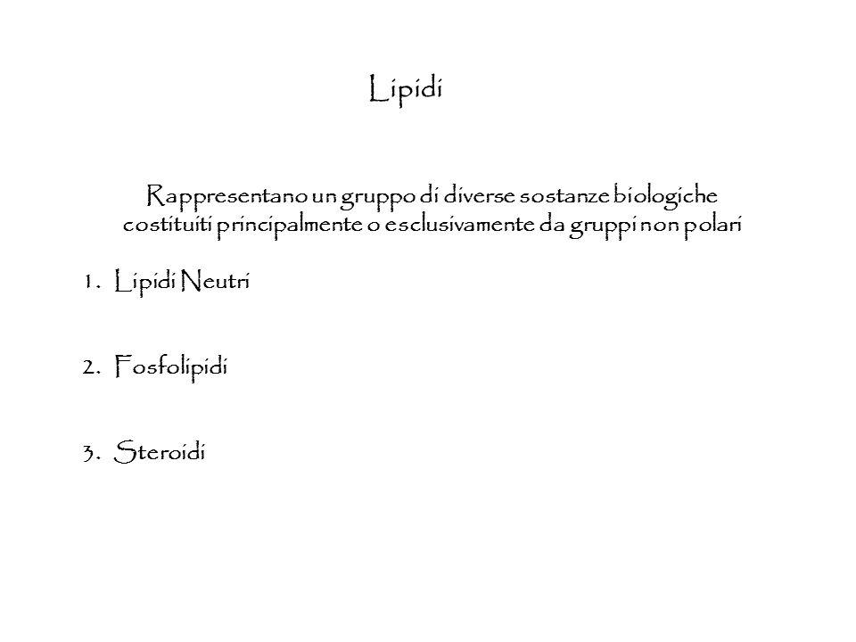 Lipidi Rappresentano un gruppo di diverse sostanze biologiche