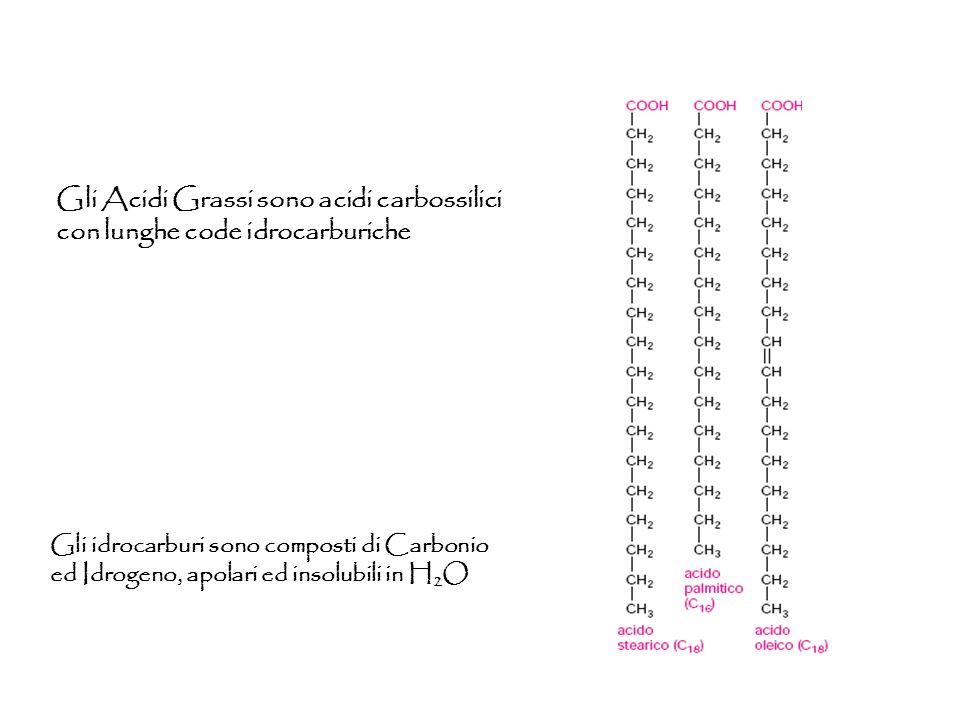 Gli Acidi Grassi sono acidi carbossilici con lunghe code idrocarburiche