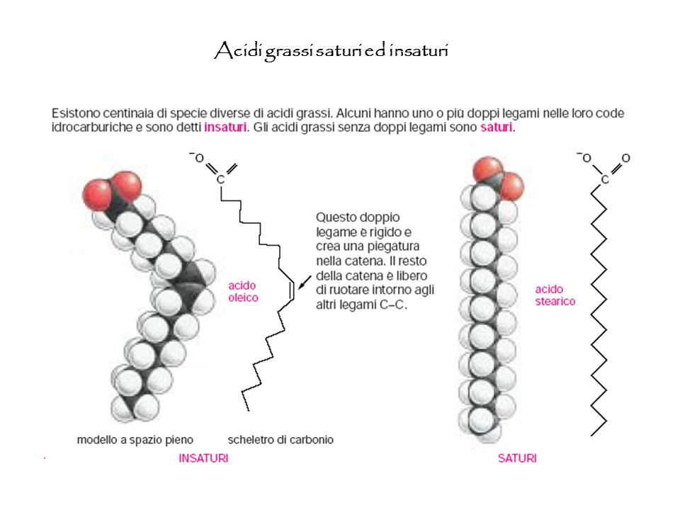 Acidi grassi saturi ed insaturi