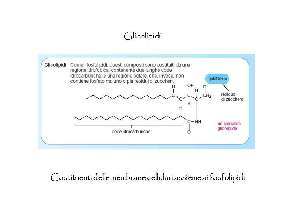Glicolipidi Costituenti delle membrane cellulari assieme ai fosfolipidi