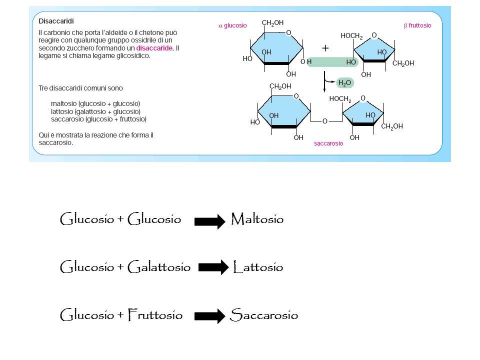 Glucosio + Glucosio Maltosio