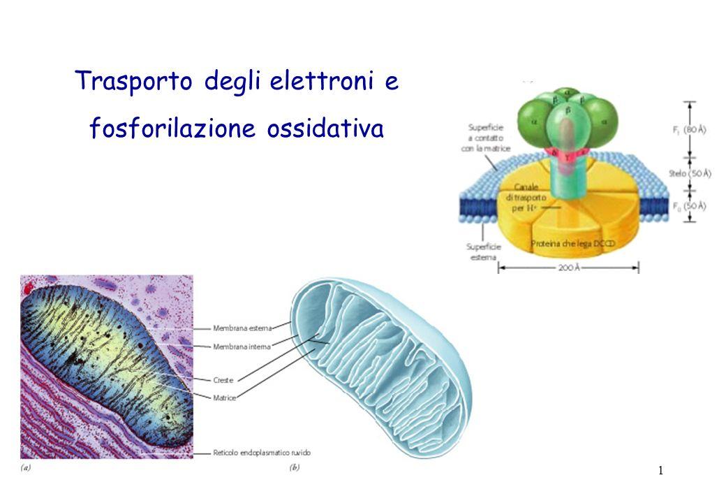 Trasporto degli elettroni e fosforilazione ossidativa