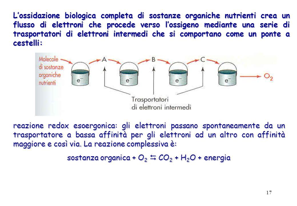 sostanza organica + O2 D CO2 + H2O + energia
