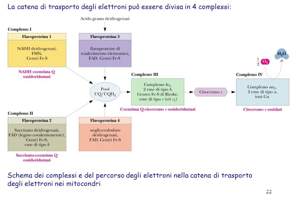 La catena di trasporto degli elettroni può essere divisa in 4 complessi: