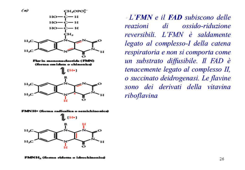 L'FMN e il FAD subiscono delle reazioni di ossido-riduzione reversibili.