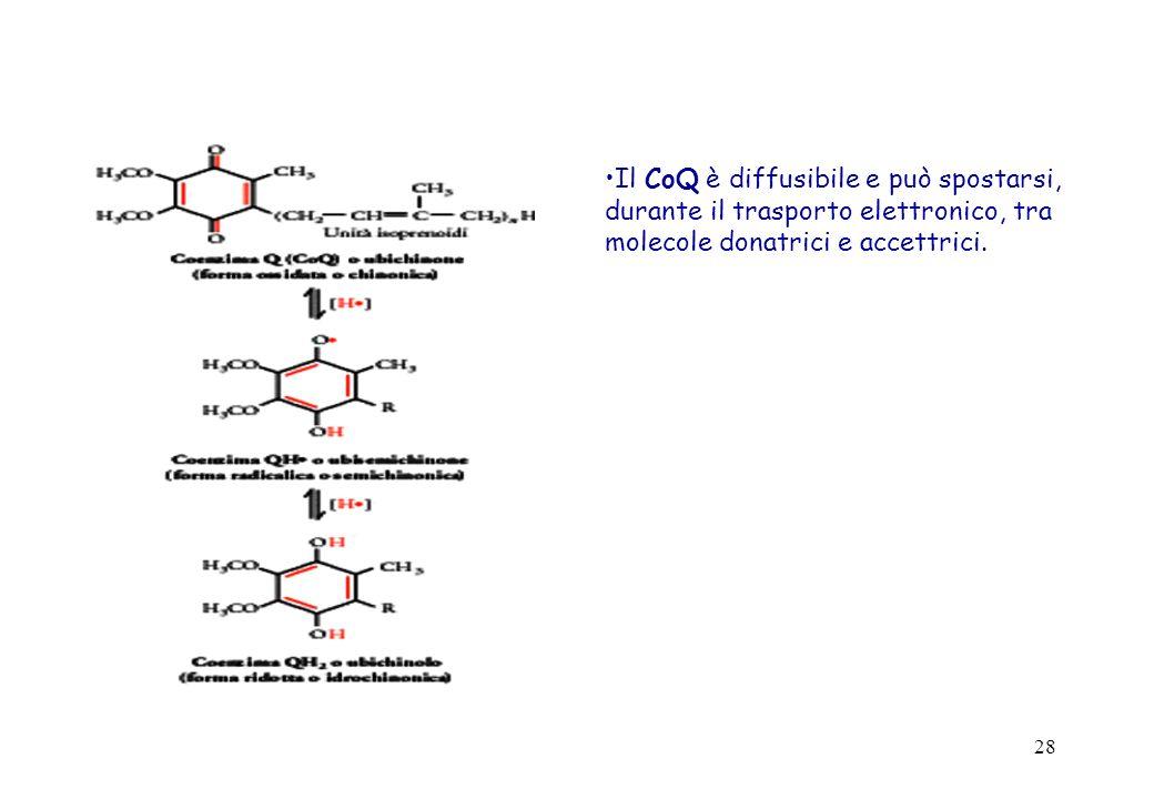 Il CoQ è diffusibile e può spostarsi, durante il trasporto elettronico, tra molecole donatrici e accettrici.