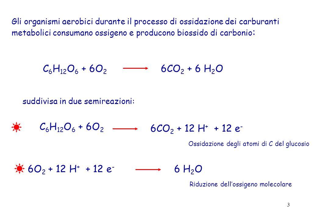 C6H12O6 + 6O2 6CO2 + 6 H2O C6H12O6 + 6O2 6CO2 + 12 H+ + 12 e-