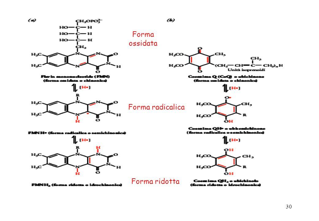 Forma ossidata Forma radicalica Forma ridotta
