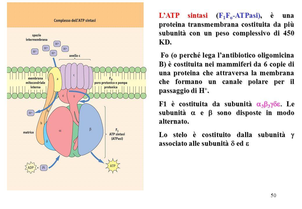 L'ATP sintasi (F1Fo-ATPasi), è una proteina transmembrana costituita da più subunità con un peso complessivo di 450 KD.