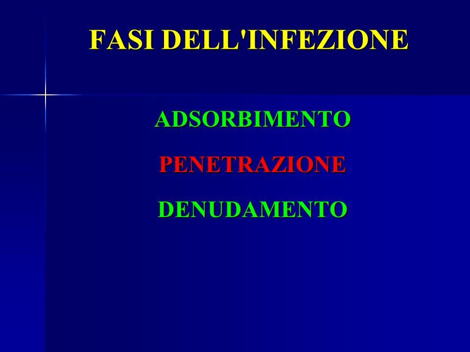 FASI DELL INFEZIONE ADSORBIMENTO PENETRAZIONE DENUDAMENTO