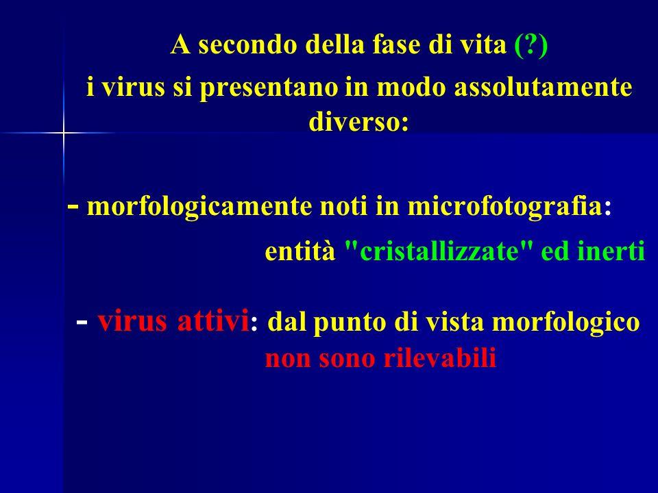 - morfologicamente noti in microfotografia: