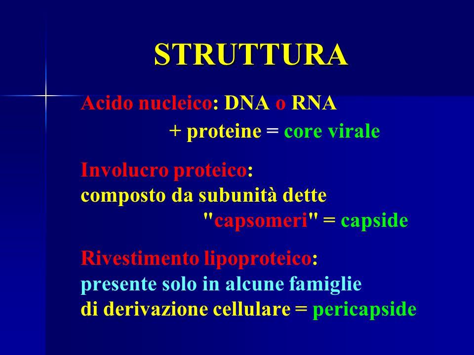 + proteine = core virale