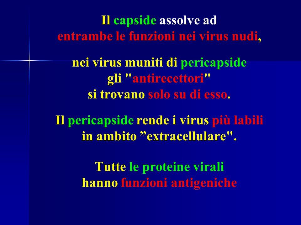 entrambe le funzioni nei virus nudi, nei virus muniti di pericapside