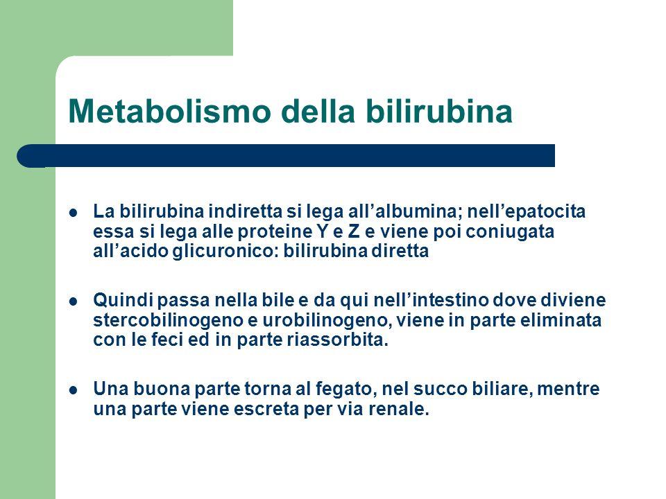 Metabolismo della bilirubina