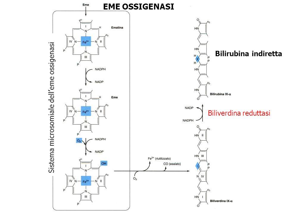 EME OSSIGENASI Bilirubina indiretta