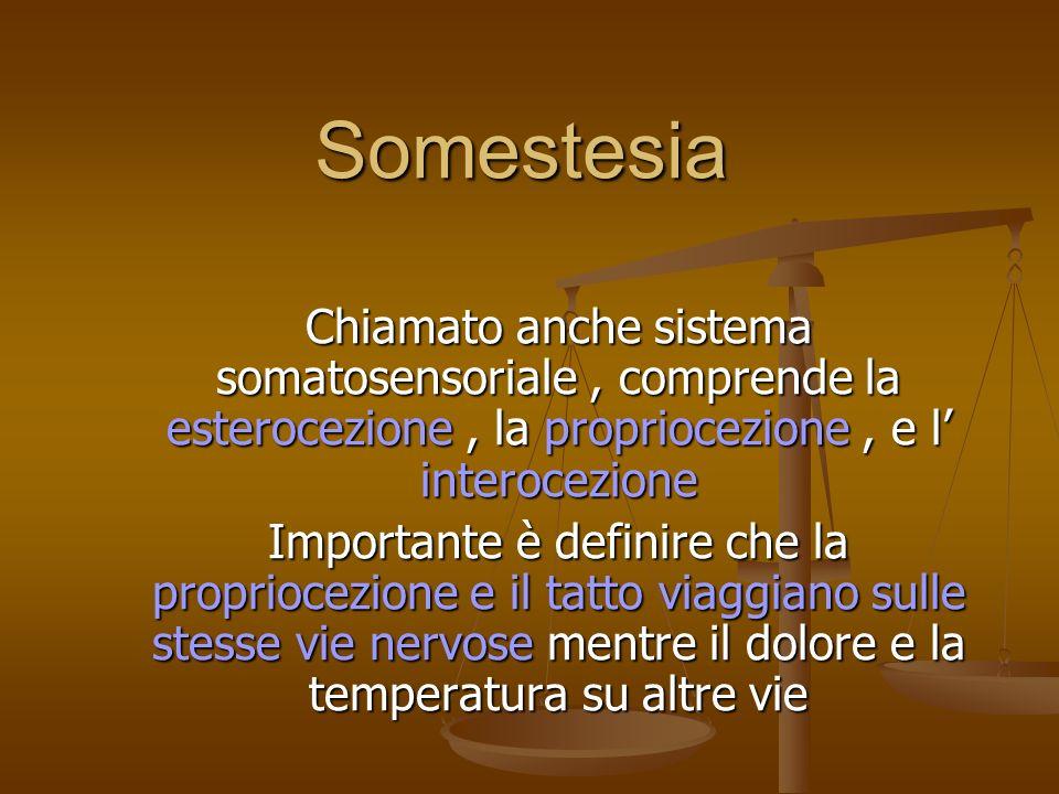 Somestesia Chiamato anche sistema somatosensoriale , comprende la esterocezione , la propriocezione , e l' interocezione.