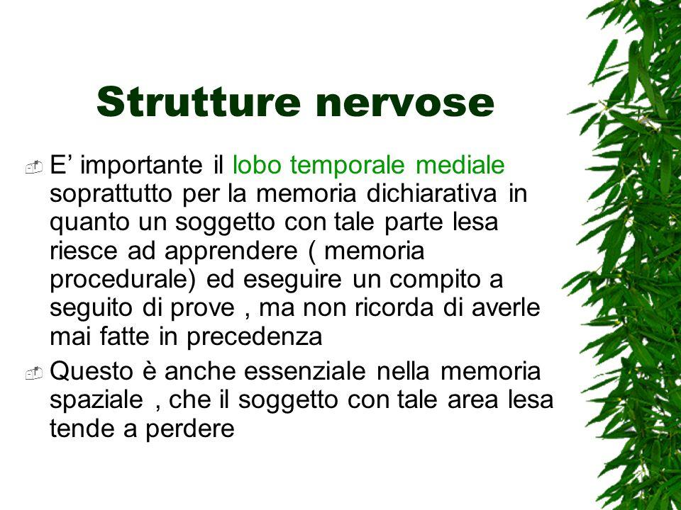 Strutture nervose