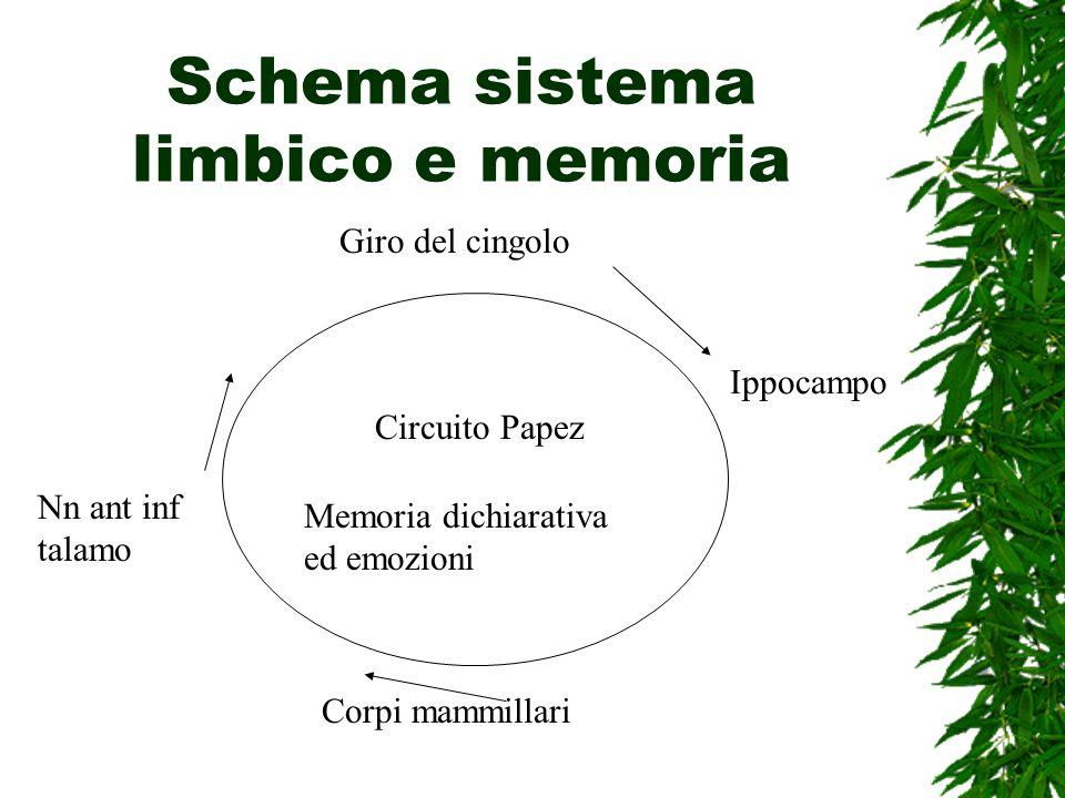Schema sistema limbico e memoria