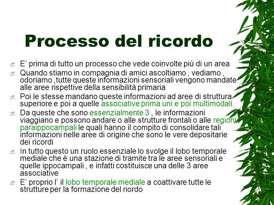 Processo del ricordo E' prima di tutto un processo che vede coinvolte più di un area.