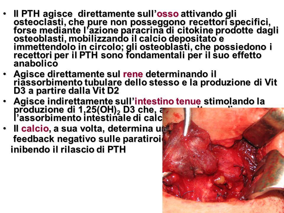 Il PTH agisce direttamente sull'osso attivando gli osteoclasti, che pure non posseggono recettori specifici, forse mediante l'azione paracrina di citokine prodotte dagli osteoblasti, mobilizzando il calcio depositato e immettendolo in circolo; gli osteoblasti, che possiedono i recettori per il PTH sono fondamentali per il suo effetto anabolico