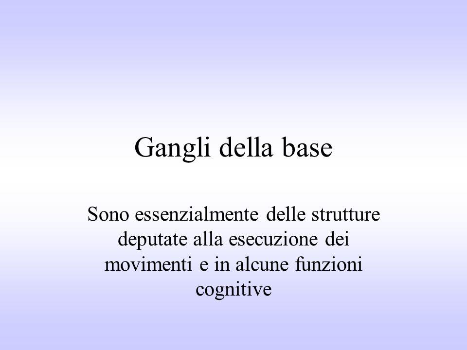 Gangli della base Sono essenzialmente delle strutture deputate alla esecuzione dei movimenti e in alcune funzioni cognitive.