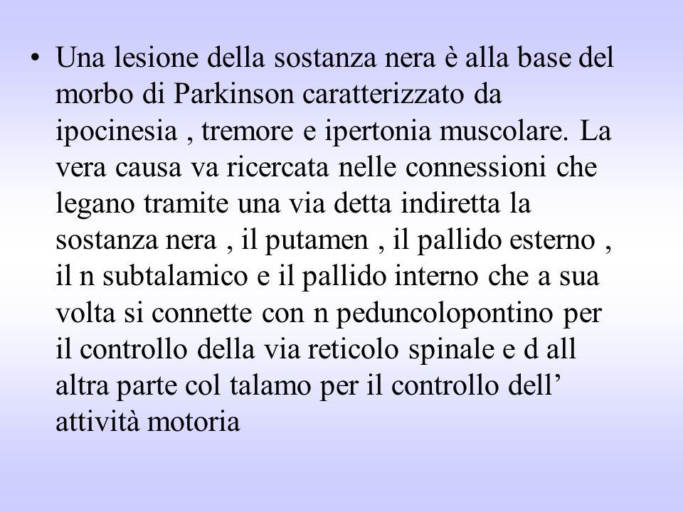 Una lesione della sostanza nera è alla base del morbo di Parkinson caratterizzato da ipocinesia , tremore e ipertonia muscolare.