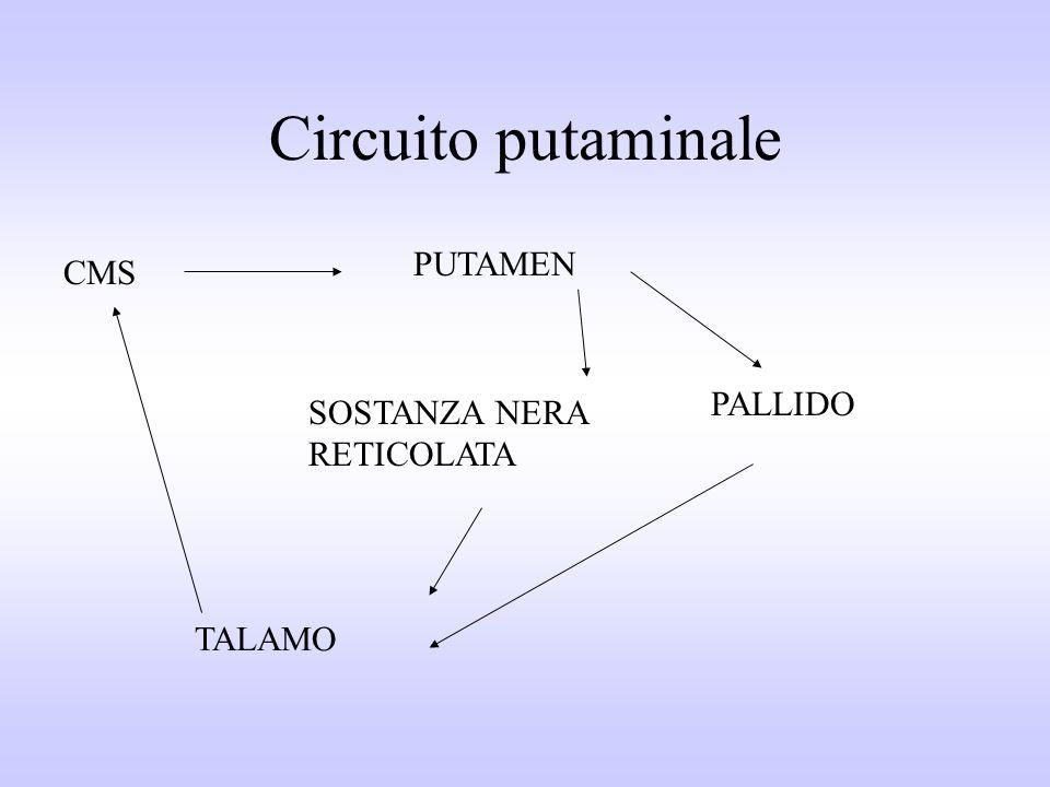 Circuito putaminale PUTAMEN CMS PALLIDO SOSTANZA NERA RETICOLATA