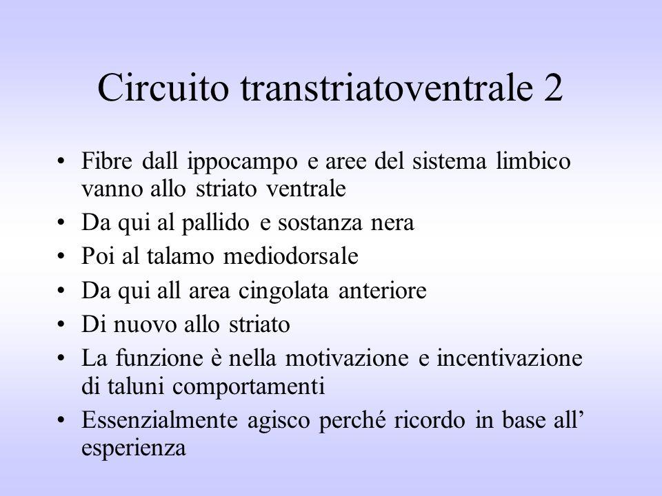 Circuito transtriatoventrale 2