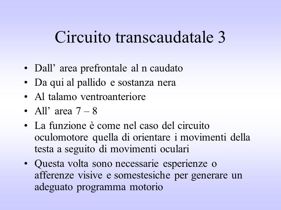 Circuito transcaudatale 3