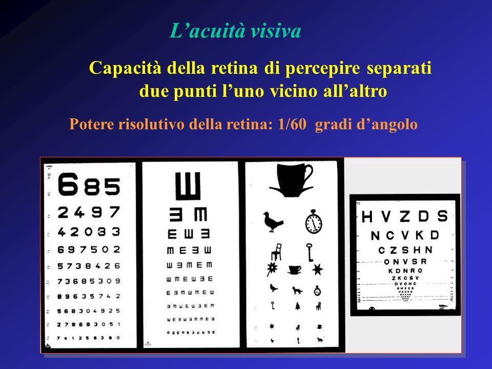 L'acuità visiva Capacità della retina di percepire separati