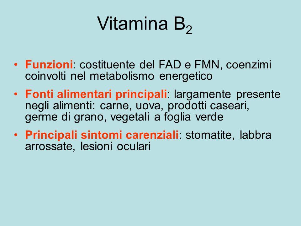 Vitamina B2 Funzioni: costituente del FAD e FMN, coenzimi coinvolti nel metabolismo energetico.