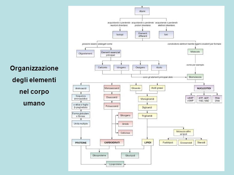 Organizzazione degli elementi nel corpo umano