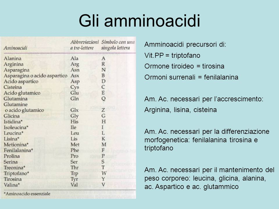 Gli amminoacidi Amminoacidi precursori di: Vit.PP = triptofano