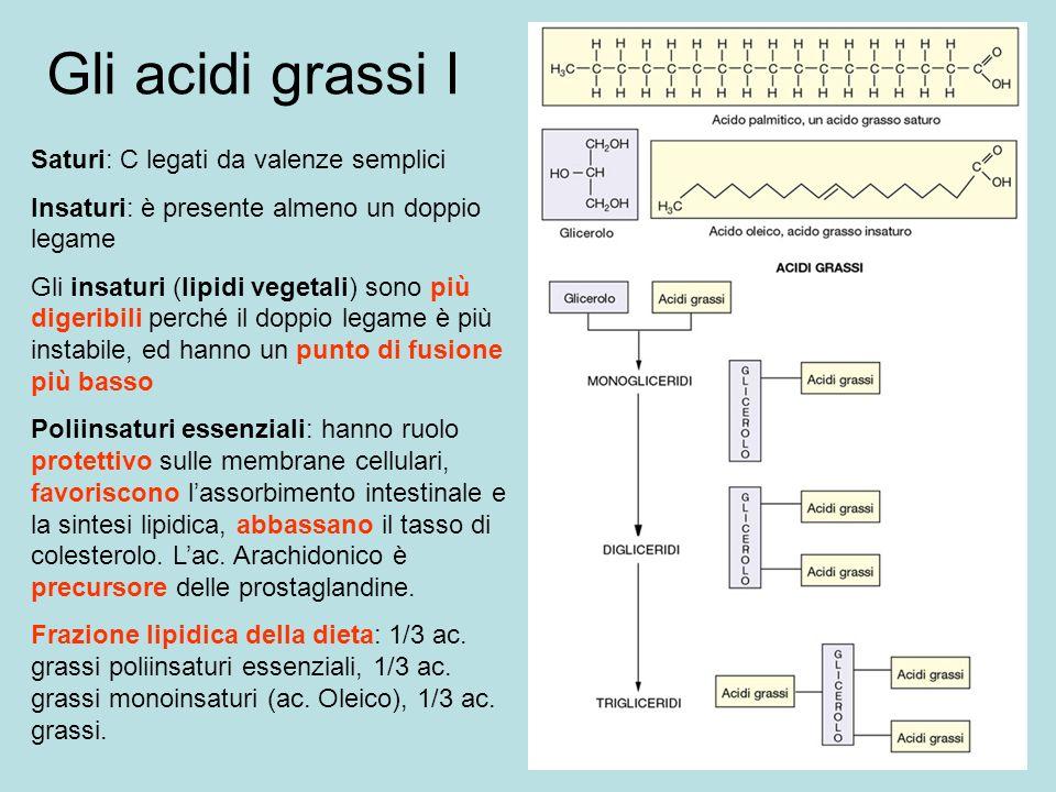 Gli acidi grassi I Saturi: C legati da valenze semplici