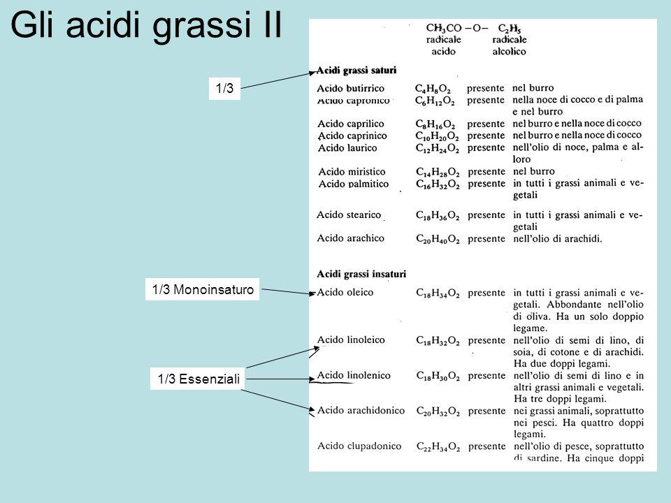 Gli acidi grassi II 1/3 1/3 Monoinsaturo 1/3 Essenziali