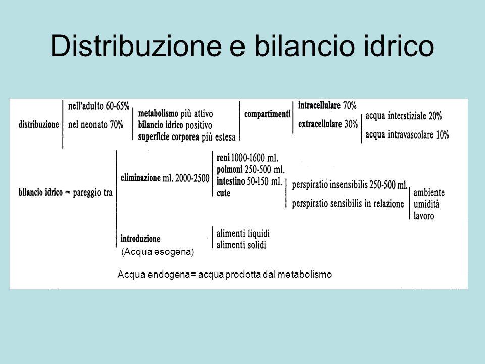 Distribuzione e bilancio idrico