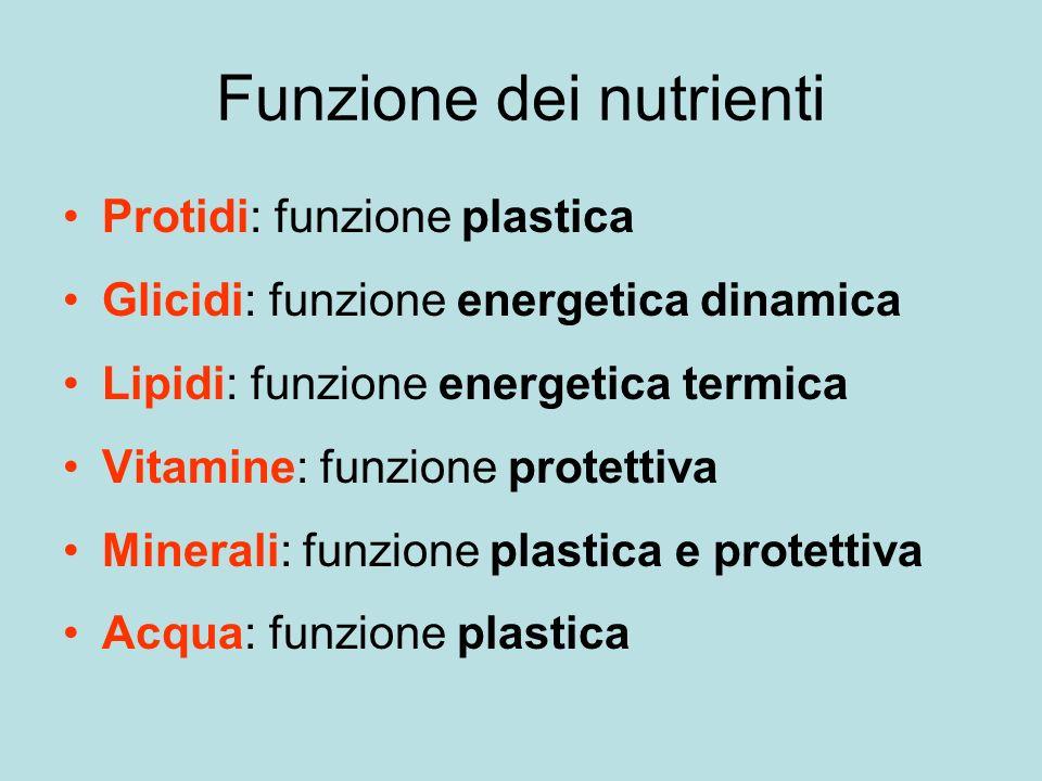 Funzione dei nutrienti