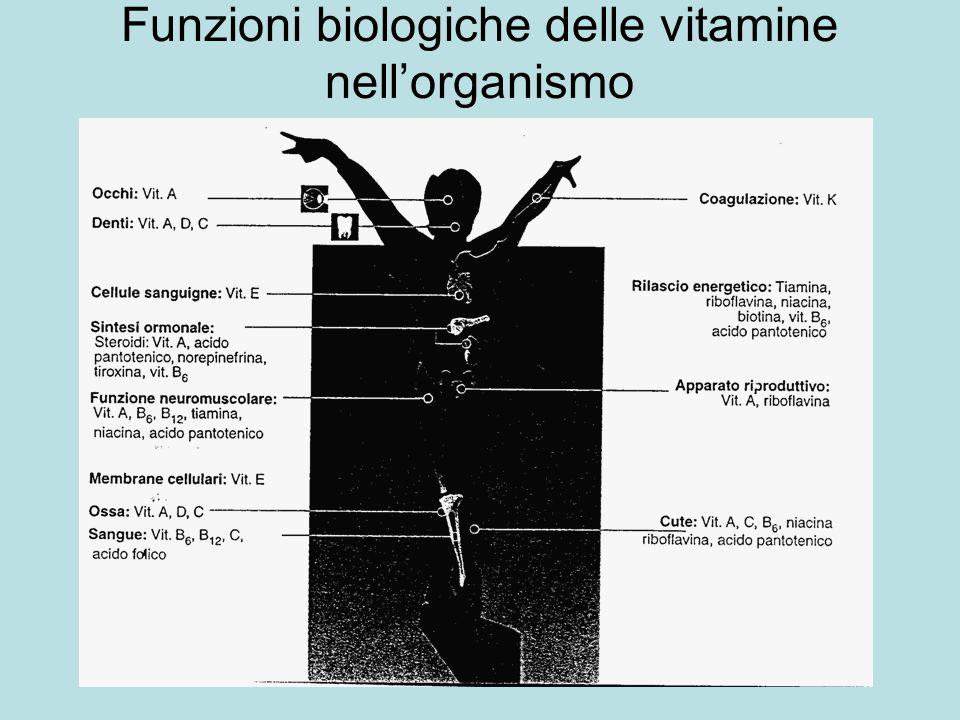 Funzioni biologiche delle vitamine nell'organismo