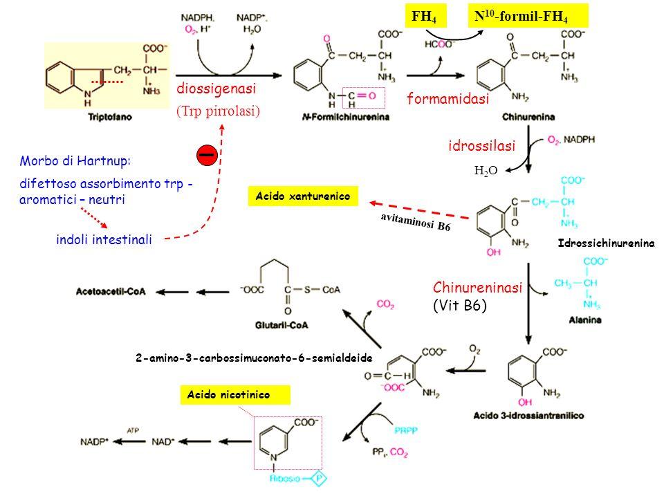 FH4 N10-formil-FH4 diossigenasi formamidasi (Trp pirrolasi)