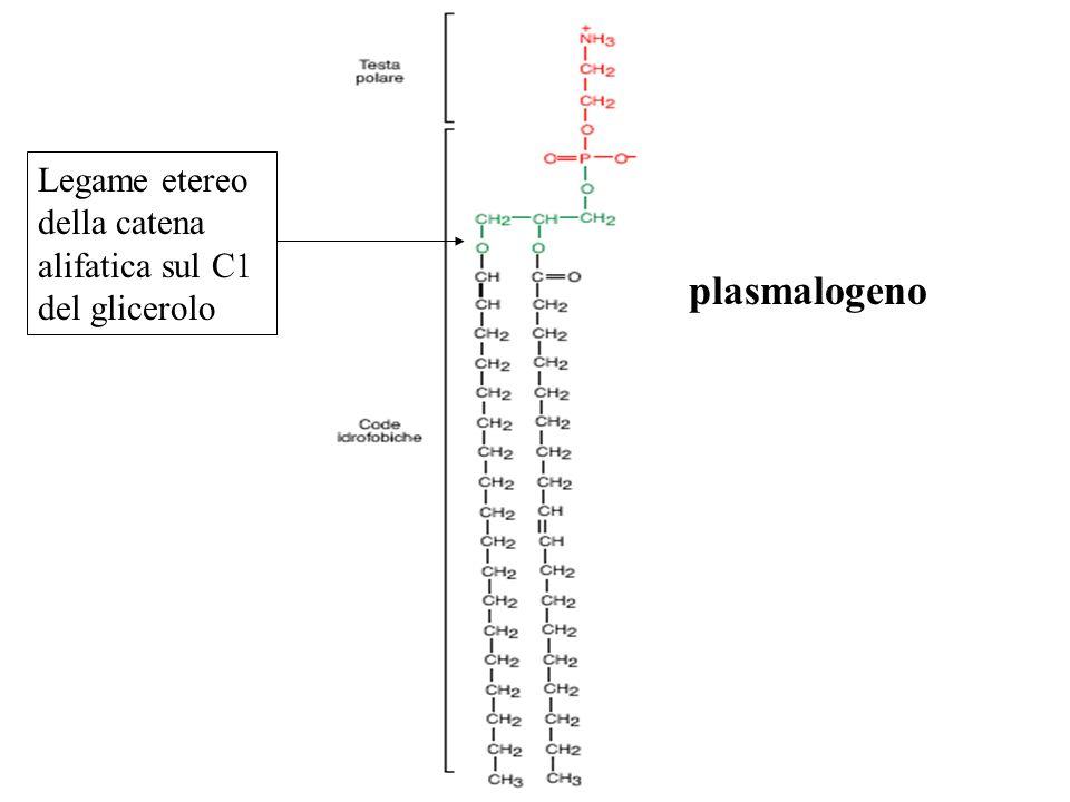 Legame etereo della catena alifatica sul C1 del glicerolo